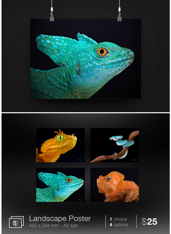 COLD INSTINCT: Stunning Reptiles and Amphibians | Indiegogo